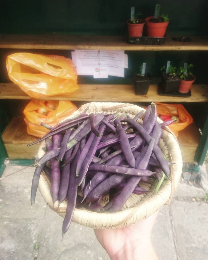 Stocking up #Vegdrop with fresh beans. Pop along and pick up some free produce #Bath #growyourown #Walcot  http:// ift.tt/2wdFB2t  &nbsp;  <br>http://pic.twitter.com/M3wyWD310v