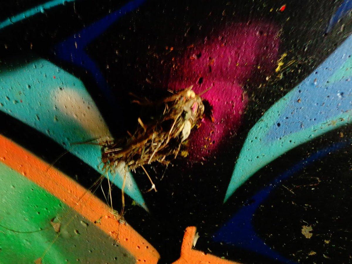 #abstractart. number 42 from #artisttwitter #bradley pic.twitter.com/qgFwmAhyrh