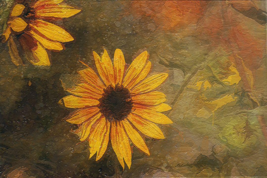New #sunflower #digitalpainting for sale.   https:// buff.ly/2vOd7tF  &nbsp;  <br>http://pic.twitter.com/4Tbkur7uLk