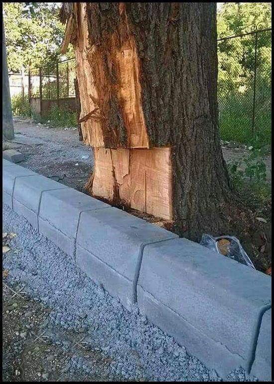 Asırlık betonun olduğu yerden ağaç çıkmı...