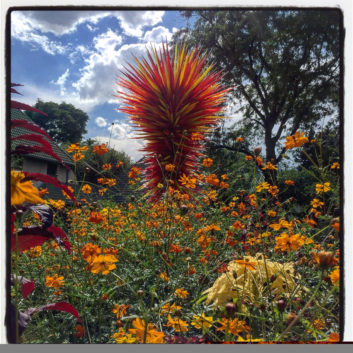 delighted to discover the art of both #calder and #chihuly on my first visit to denver @botanic gardens<br>http://pic.twitter.com/MCYPia5aEb