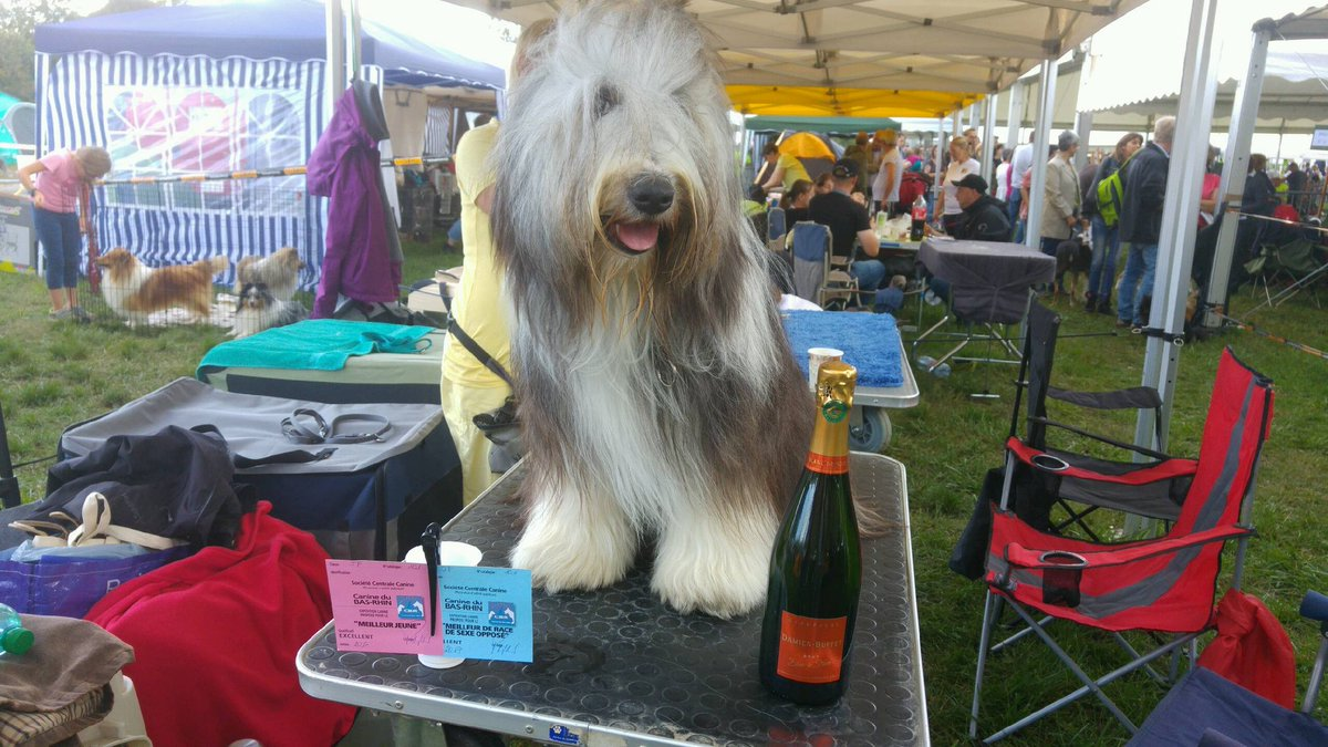 Amen  ! For our #beardedcollie 1st show in #Strasbourg so #champagne @champagneDBSacy  to share !  we are fair, well done to all cheers<br>http://pic.twitter.com/1tSEJN5EJb