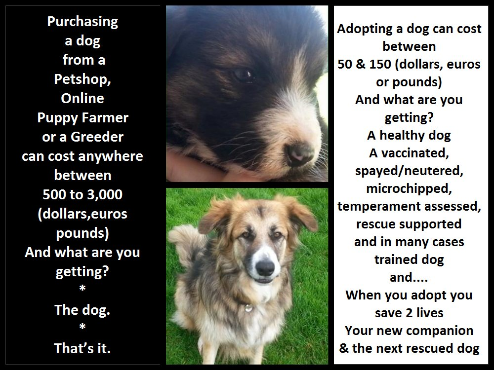 Based this on an excellent article from @OneGreenPlanet #AdoptDontShop...