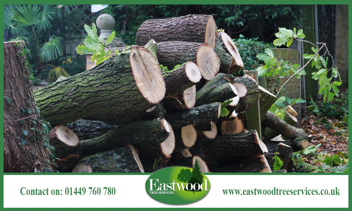 Click here to read about our #TreeConsultancy services &gt;&gt;&gt;  http:// bit.ly/EastwoodTreeSe rvicesConsultancy &nbsp; …  #Eastwood #Trees<br>http://pic.twitter.com/SDlWAxdvFg