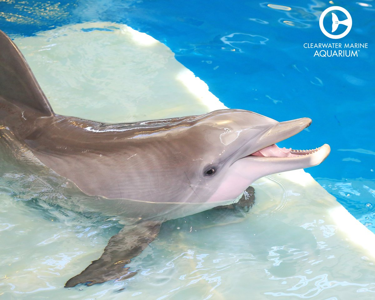 Hope Dolphin is always making us laugh! Send us your best silly #selfie for #SelfieSunday!<br>http://pic.twitter.com/Tph4yAkUqA