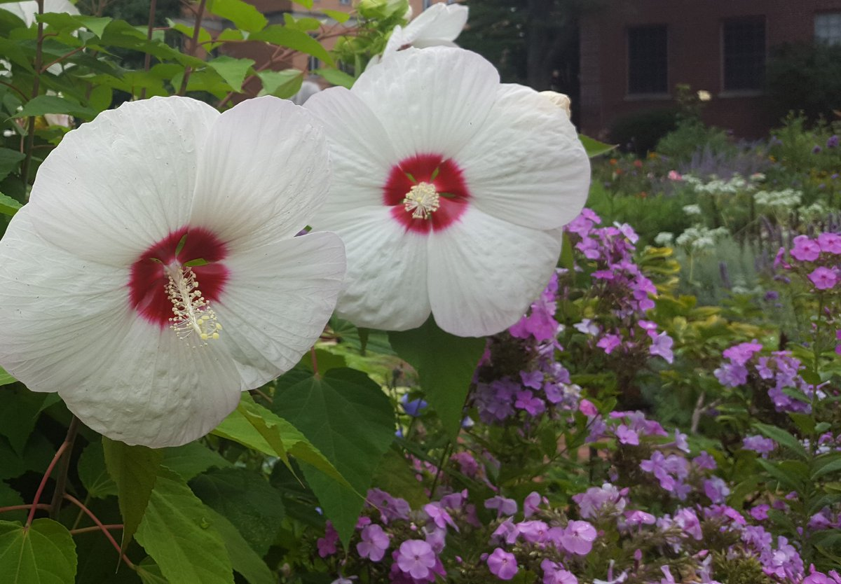 Marcy Dermansky On Twitter Hibiscus I Think And Pretty Little