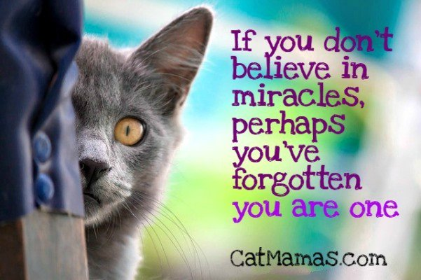 All you have to do is look at your own #cat to know there&#39;s #magic &amp; #miracles out there in the world! #pets<br>http://pic.twitter.com/HGV1W3osRV