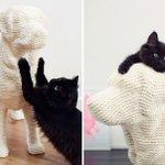 可愛すぎ爪とぎを犬用にすると、猫は大はしゃぎする