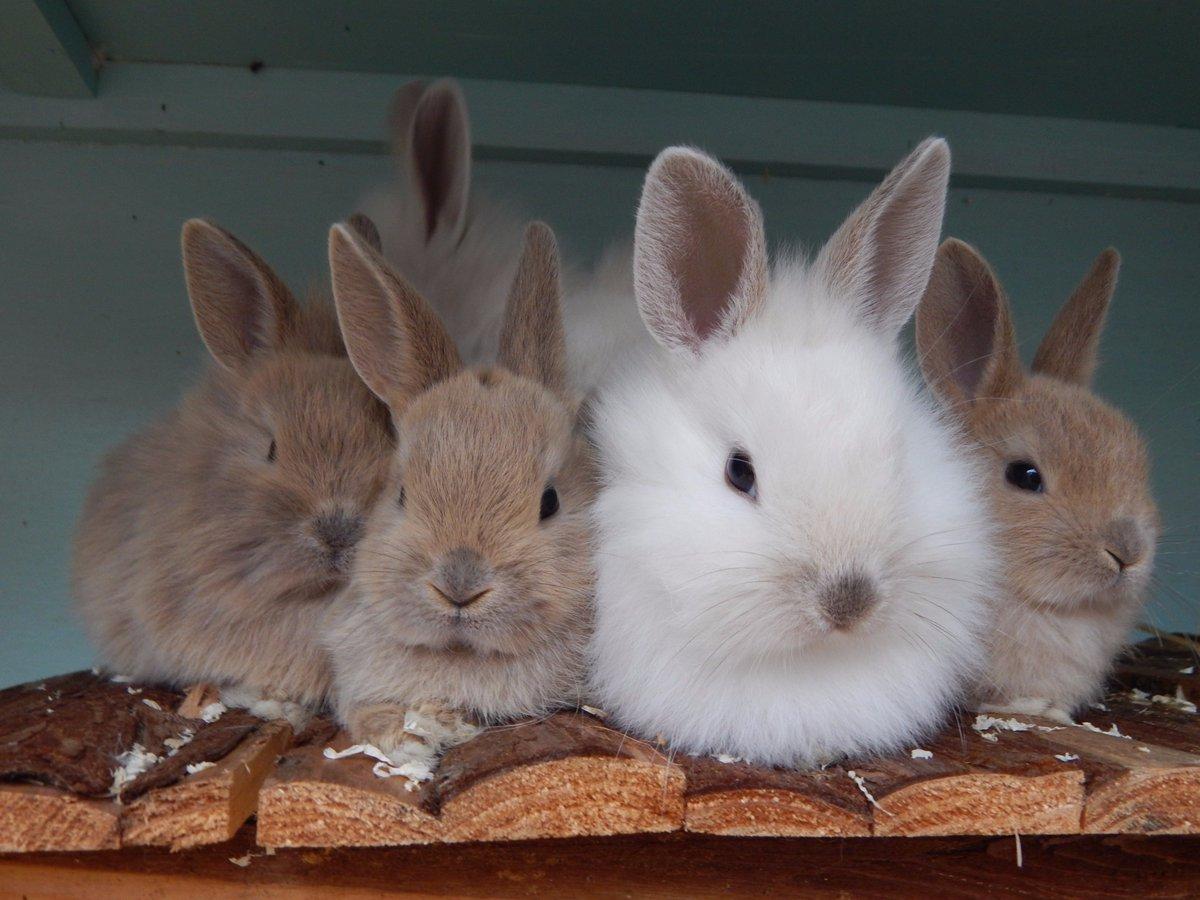 Pansy's #rabbit babies are growing up fast! #AdoptDontShop #animalresc...