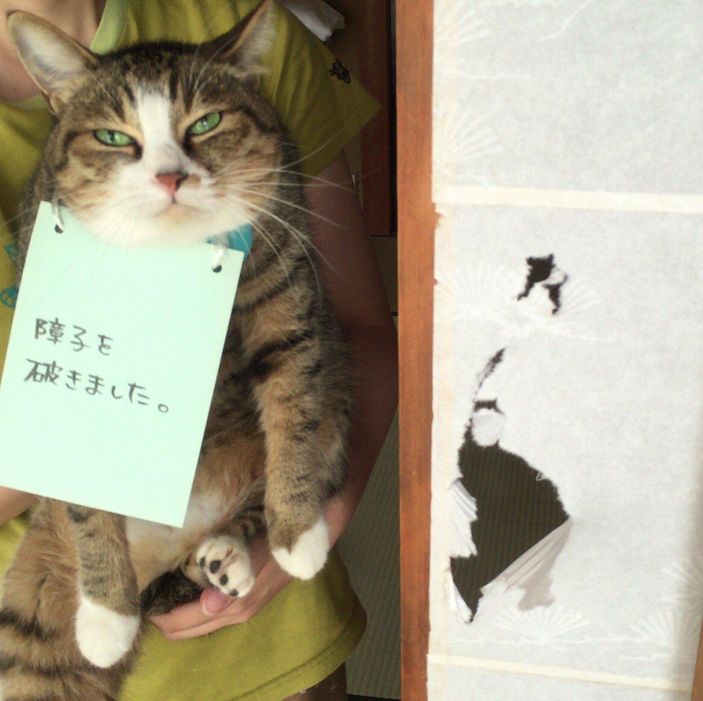 ねこが実家を満喫しすぎている pic.twitter.com/laC8JUTUSA