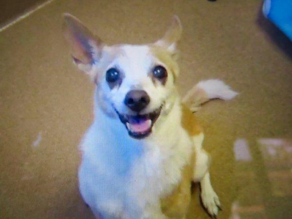 Adoptable #dog #Belle_CCSTCA_24 I have very cute smile   http:// getpet.info/Belle_CCSTCA_24  &nbsp;  <br>http://pic.twitter.com/JF94EfQjsk