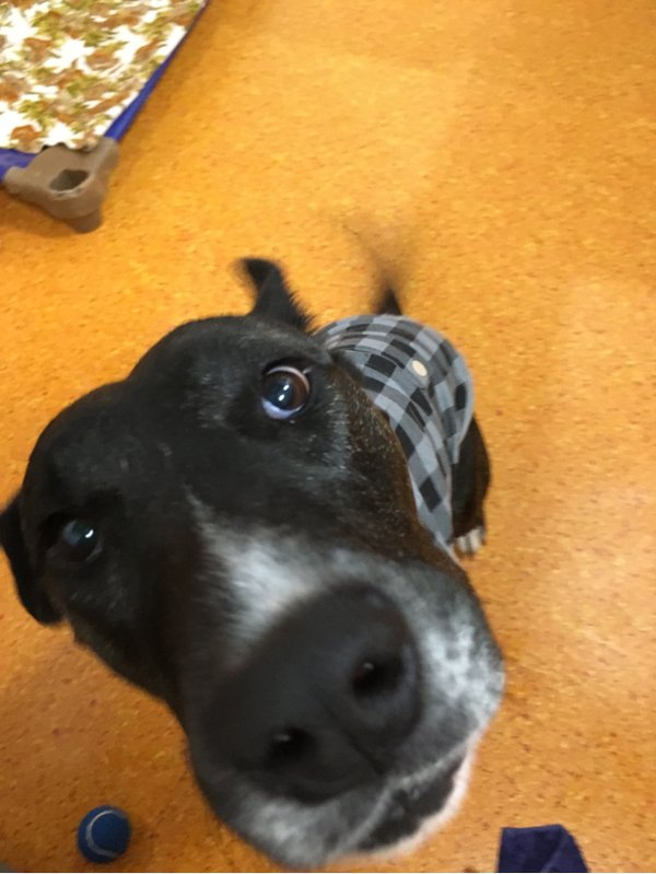Adoptable #dog #Maggie_RSPCAQLD_0U Ooh a photo of me, did you take my best side ?  http:// getpet.info/Maggie_RSPCAQL D_0U &nbsp; … <br>http://pic.twitter.com/e3Xg9Cdei3
