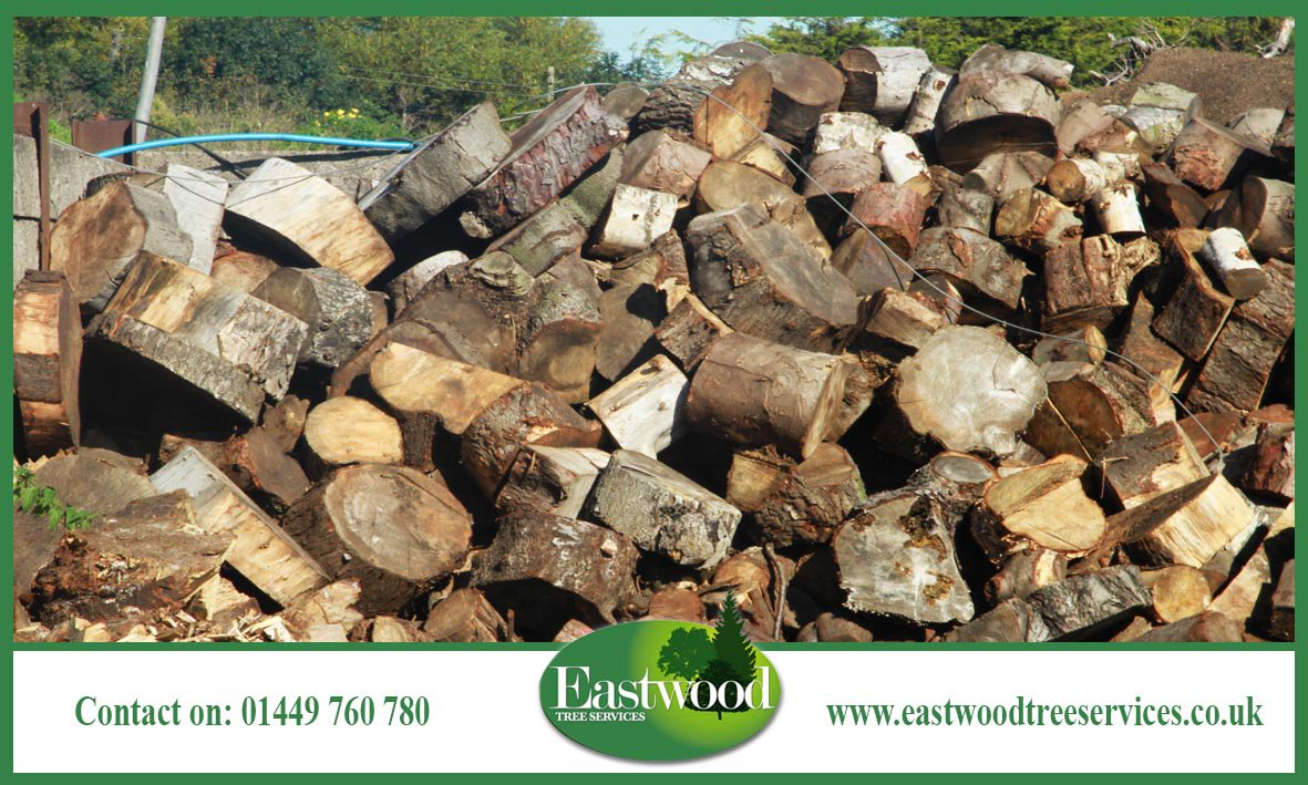 From #TreePlanting to #StumpRemoval, we can do it all &gt;&gt;  http:// bit.ly/EastwoodTreeSS ervices &nbsp; …  #Eastwood #TreeSurgery<br>http://pic.twitter.com/Q3M2OTWO6Q