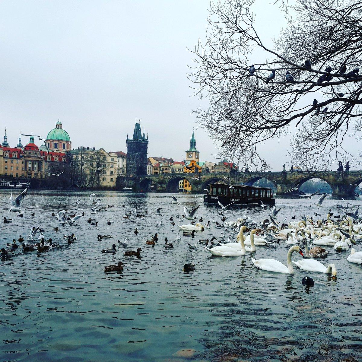 Amazing panorama of the Charles Bridge in #Prague / #travel #travelblog #travelblogger #traveling #exploring #visitCZ RT<br>http://pic.twitter.com/Ca6xb3jKjZ