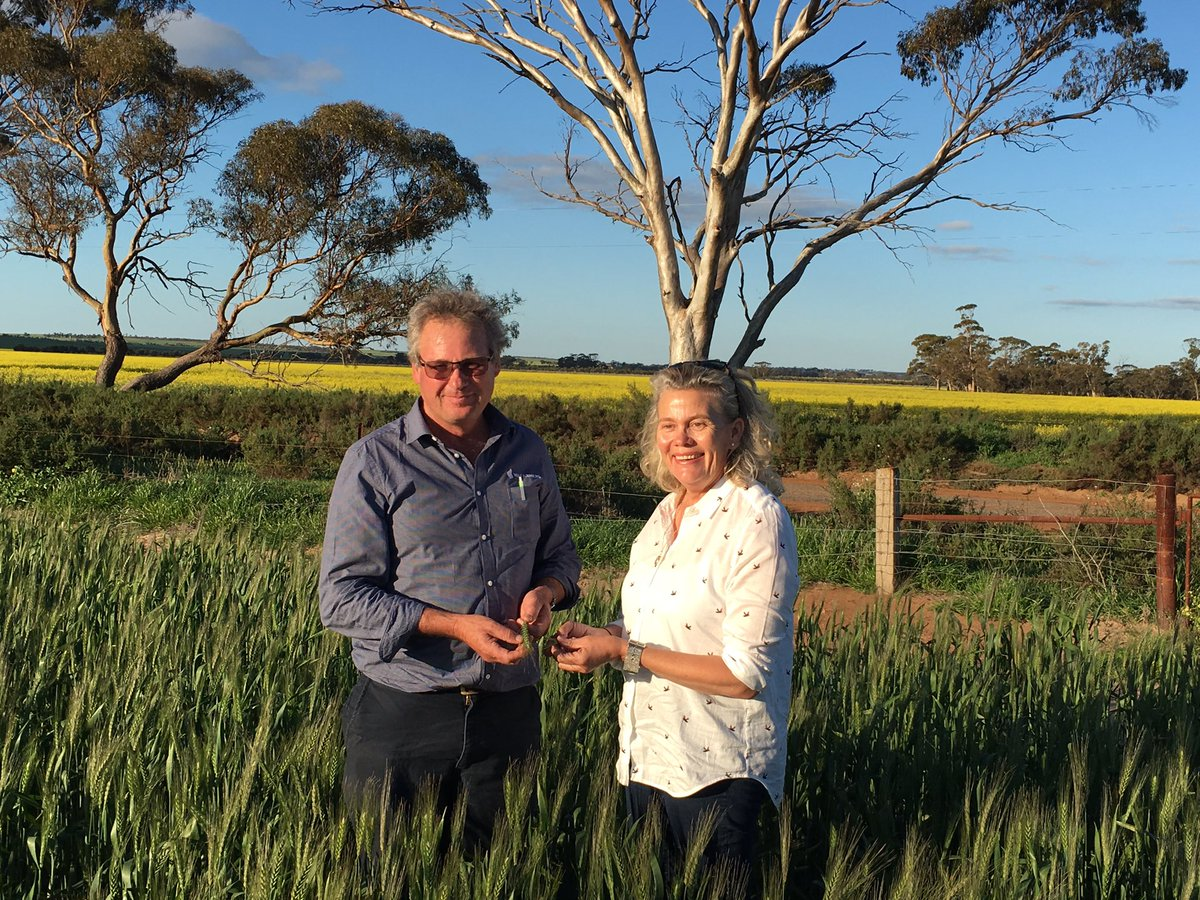 Quick visit to my farm in Tammin at the end of our #Monday #wheatbelt #tour @afsnsw @NationalFarmers #grains #canola<br>http://pic.twitter.com/lLVC6P9d2O