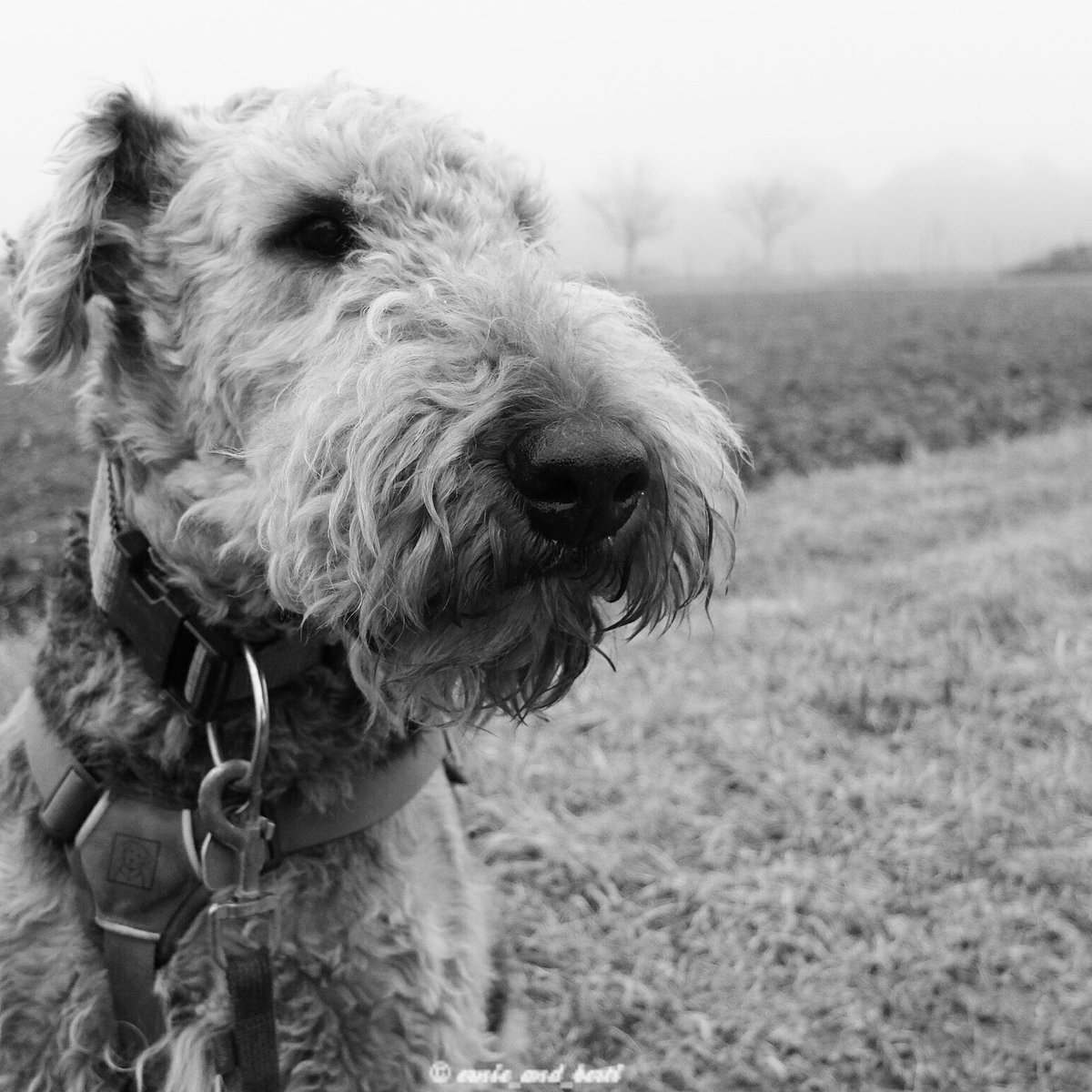 Even a grey day gets better if a #dog is around! <br>http://pic.twitter.com/A63OgHu7LV