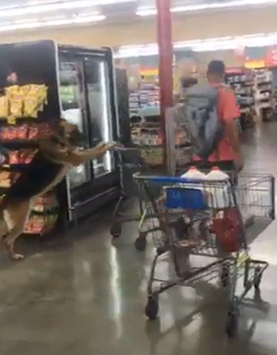 Cachorro empurra carrinho de supermercado nos EUA https://t.co/1wLAamd29y #PlanetaBizarro #G1
