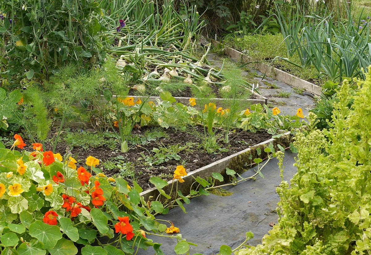 End of #NationalAllotmentWeek - &amp; I think we&#39;ve made some progress. Now we just need a week of blanching &amp; freezing! <br>http://pic.twitter.com/b787oV69r3