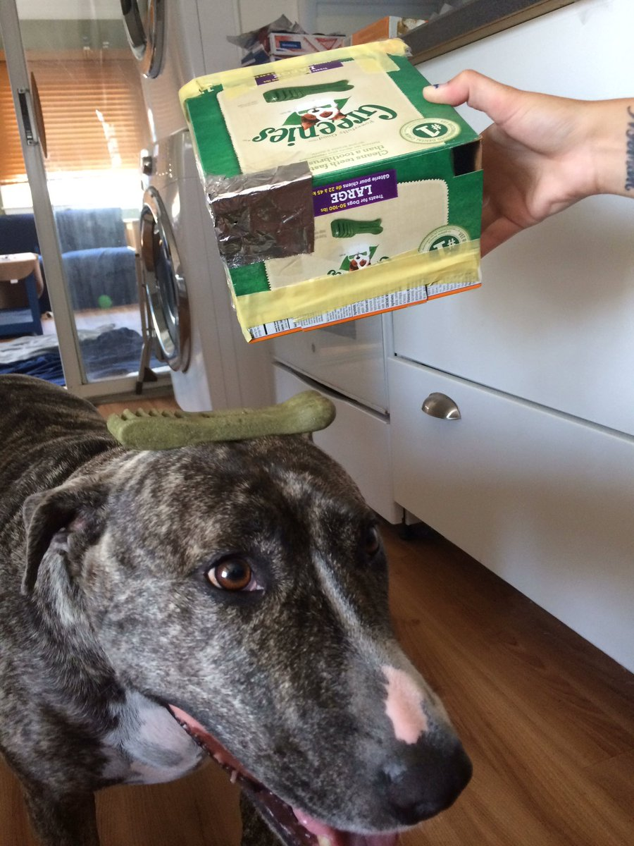 @Greenies thanks for helping us build our own solar eclipse viewer!! Our Jewel bear loves your treats! And we love her fresh breath! Lol https://t.co/xpmzENy5Hv