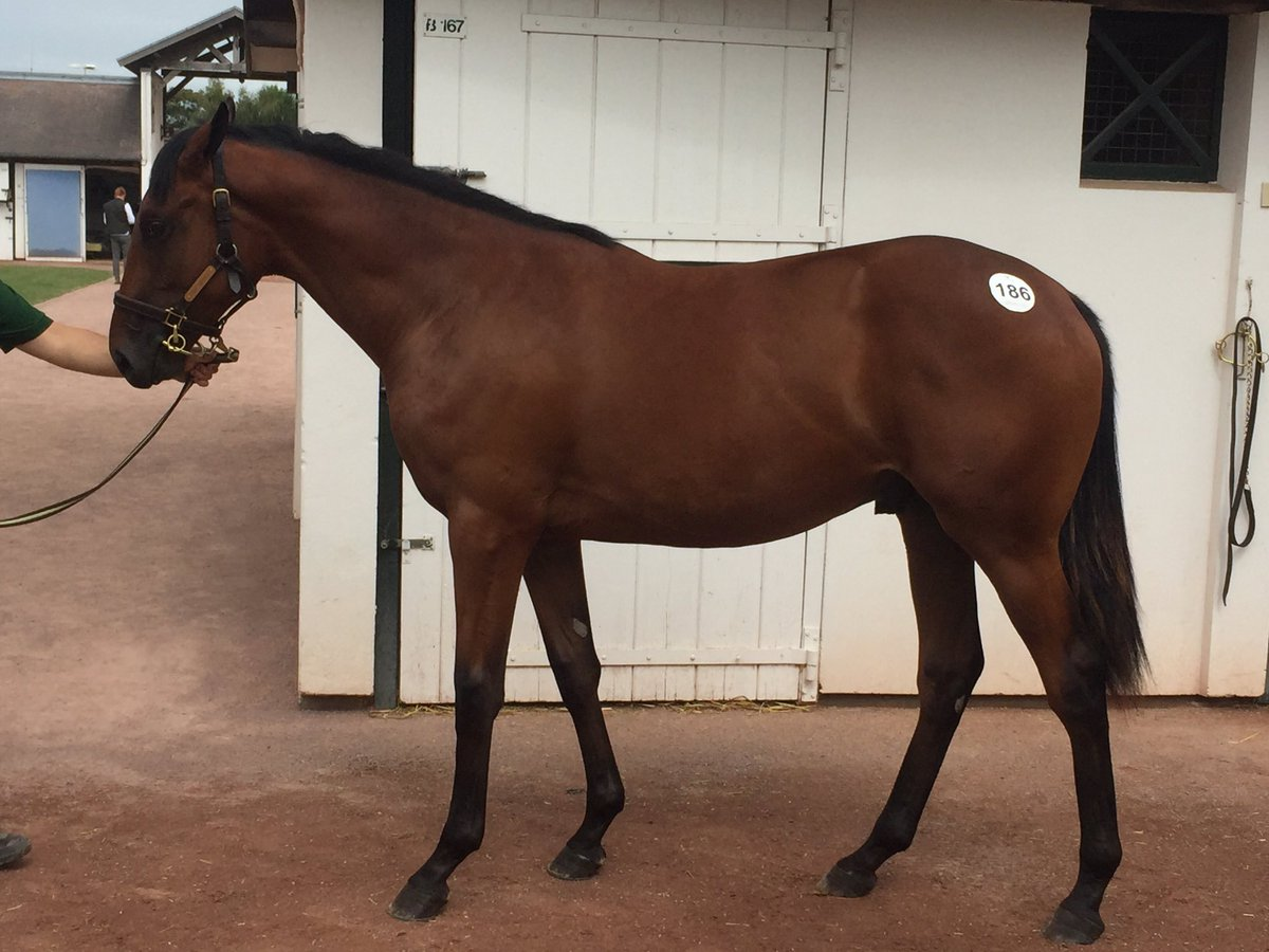1st purchase at Arquana. A cracking colt by my old pal Wootton Bassett. Enquiries to https://t.co/FQExMHPvBB