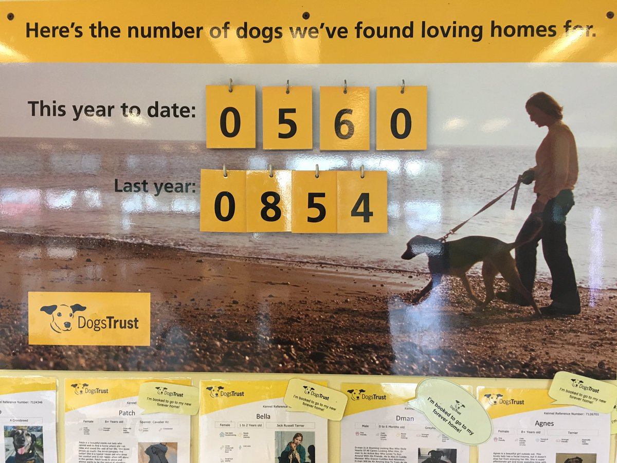 We have rehomed 560 dogs so far this year from our Rehoming Centre in...