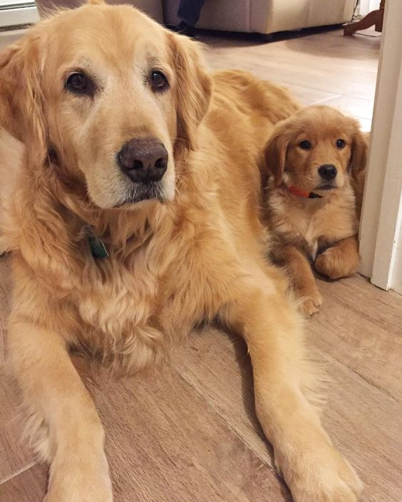 Do you personally care for your dogs? or taking care by someone?  #dog #doginspire #pet #adorable Follow us:  http:// facebook.com/doginspire/  &nbsp;  <br>http://pic.twitter.com/nMcn70Vy4N