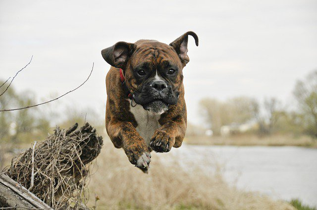 Join the ranks of our #dogfriends and save your spot in #GuessTheDog on  http:// ernie-and-berti.com  &nbsp;     It&#39;s free, it&#39;s fun, it&#39;s #dog! <br>http://pic.twitter.com/VBoKxjfzrs