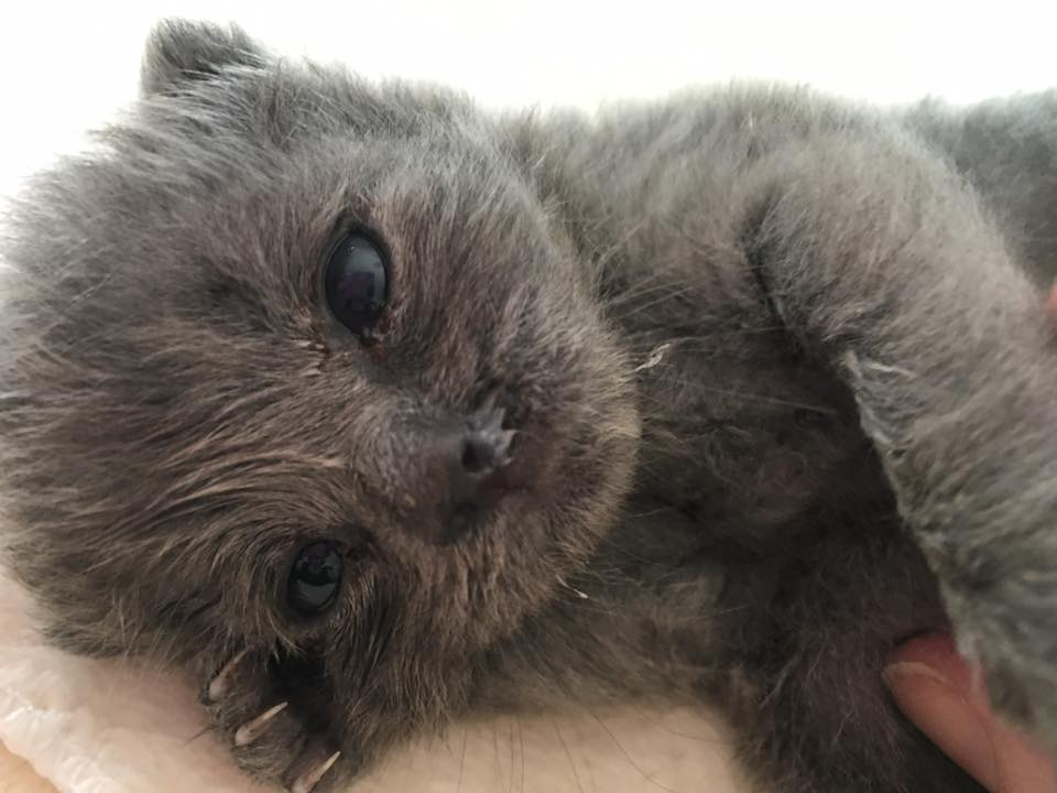 #HTWH Bottle Baby Brigade 24/7 support and necessities supplied.  Join Now! 888-768-8818 #ATL #GA #charity #volunteer #kittens<br>http://pic.twitter.com/cer7l01zI8