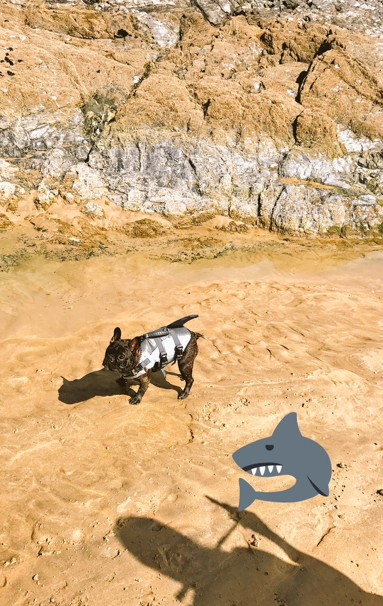 Shark spotted on beach in Cornwall! #shark #dog #dogsoftwitter<br>http://pic.twitter.com/I2Ri6OSYNM