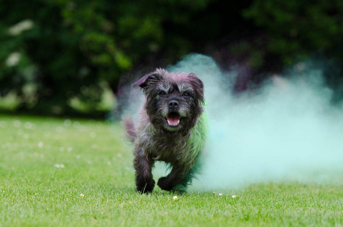 Amazing! #dog #friends<br>http://pic.twitter.com/RuLdp5dgPF