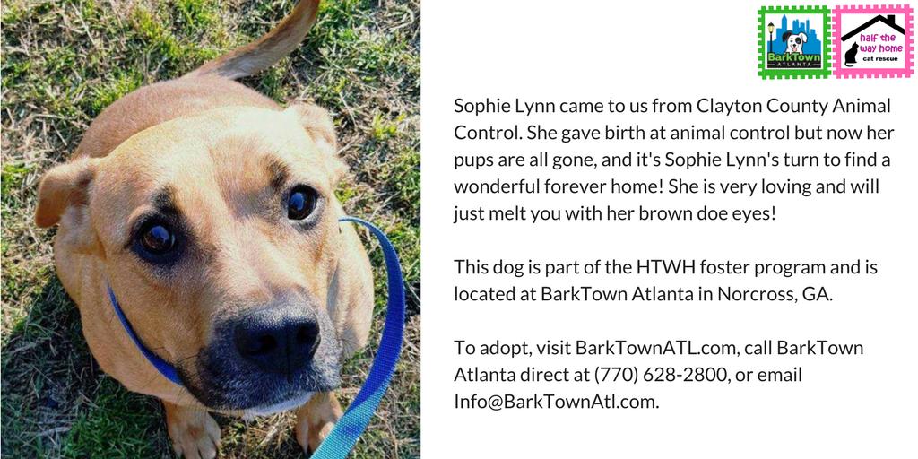 Meet SOPHIE LYNN from @BarkTownATL   http://www. barktownatl.com  &nbsp;    http:// PayPal.Me/halfthewayhome dogs &nbsp; …   #HTWH #dog #cute #love #Atl #GA #dogsoftwitter #puppy<br>http://pic.twitter.com/vVsbT1bBKS