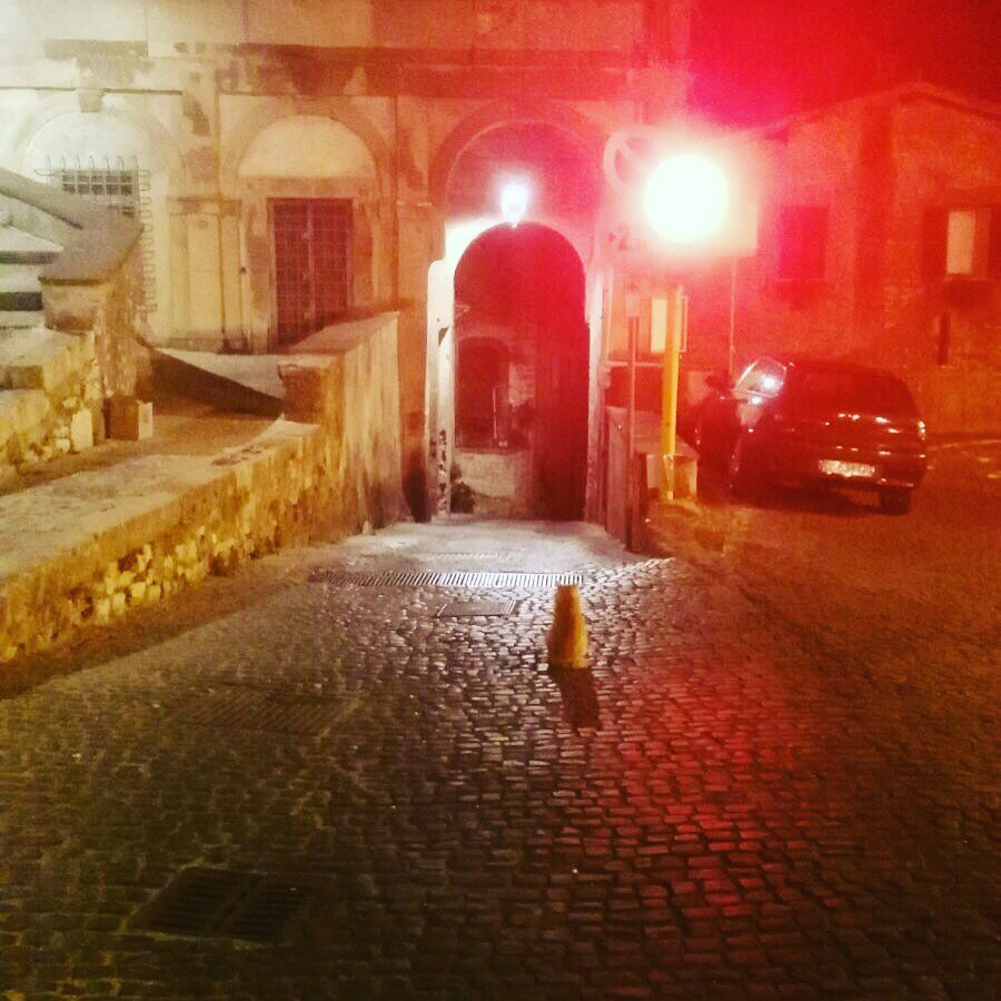 Red #stray #cat at #red stray #light<br>http://pic.twitter.com/8nmFPUeEMp