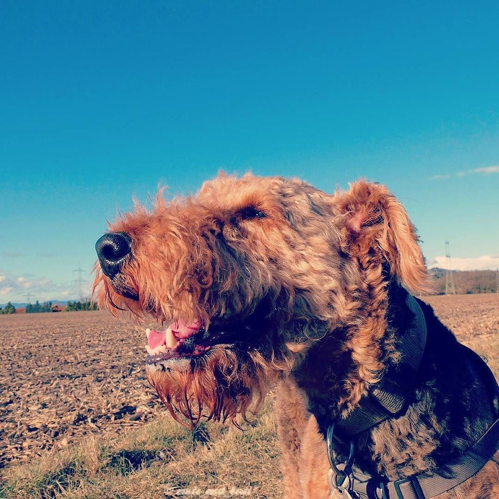 A blue sky, sunshine and a human willing to bribe you with treats, what else do you need?    #dog #smiles<br>http://pic.twitter.com/BAbkK2vaXM