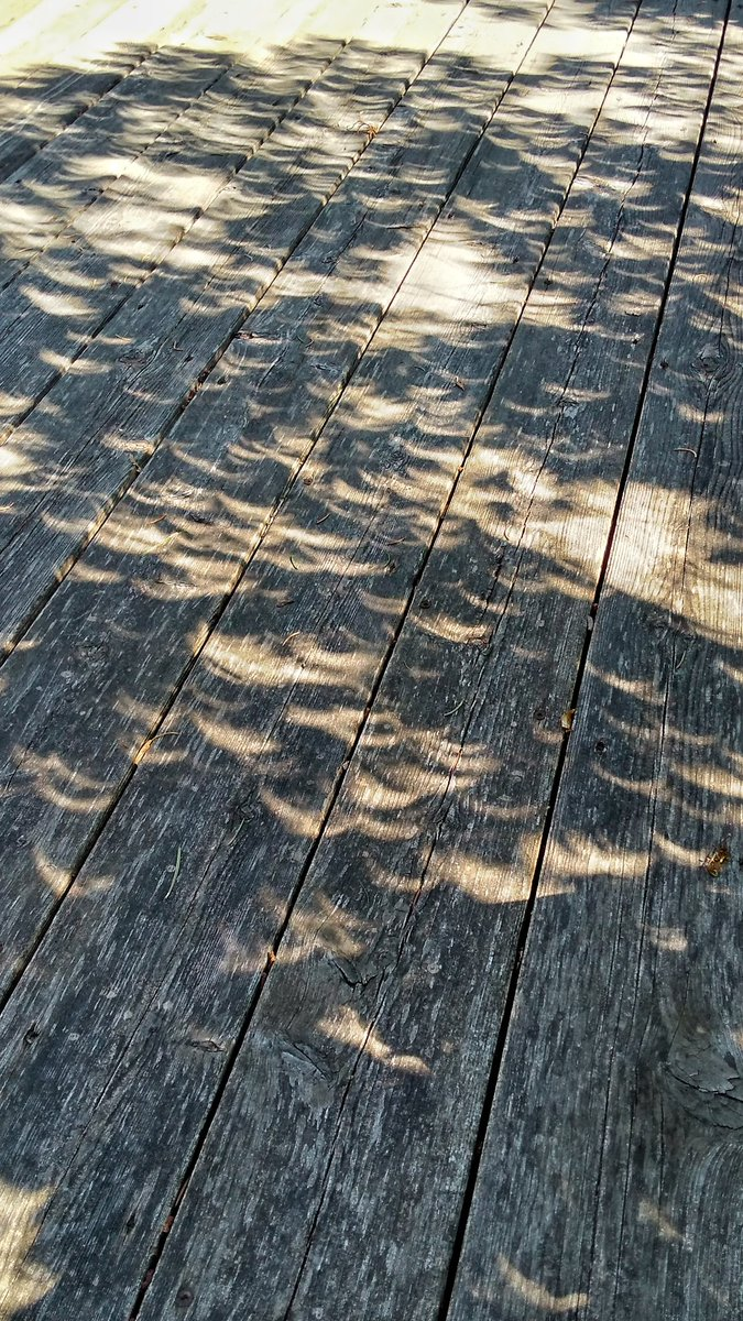 Leaves on my tree project #Eclipse on my...