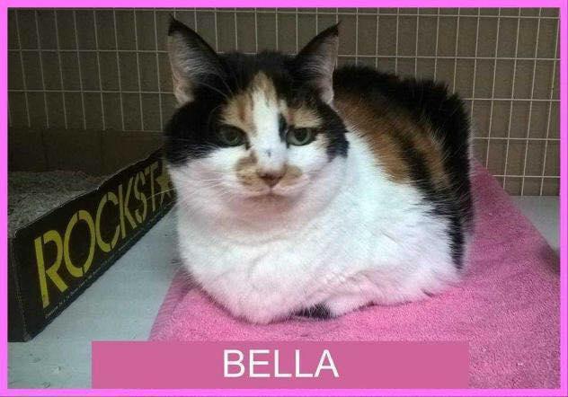 Meet BELLA at @petsupermarkets Buckhead!    http:// halfthewayhome.org  &nbsp;    http:// halfthewayhome.org/donate  &nbsp;      #HTWH #ATL #GA #cute #CatsOfTwitter #kittens<br>http://pic.twitter.com/HJPiOPkbcM