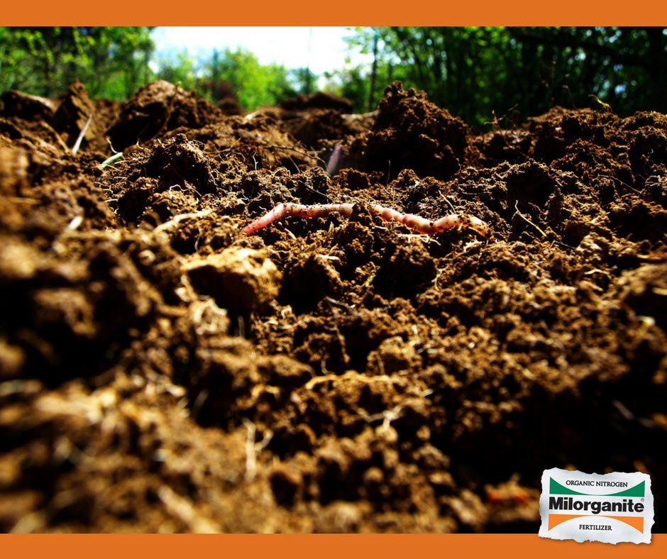 """Milorganite® Fertilizer on Twitter: """"Learn how to create an organically  rich well-drained #soil foundation for a healthy landscape.  https://t.co/DGeAbD8Qr2… https://t.co/fGf8ie1xRq"""""""