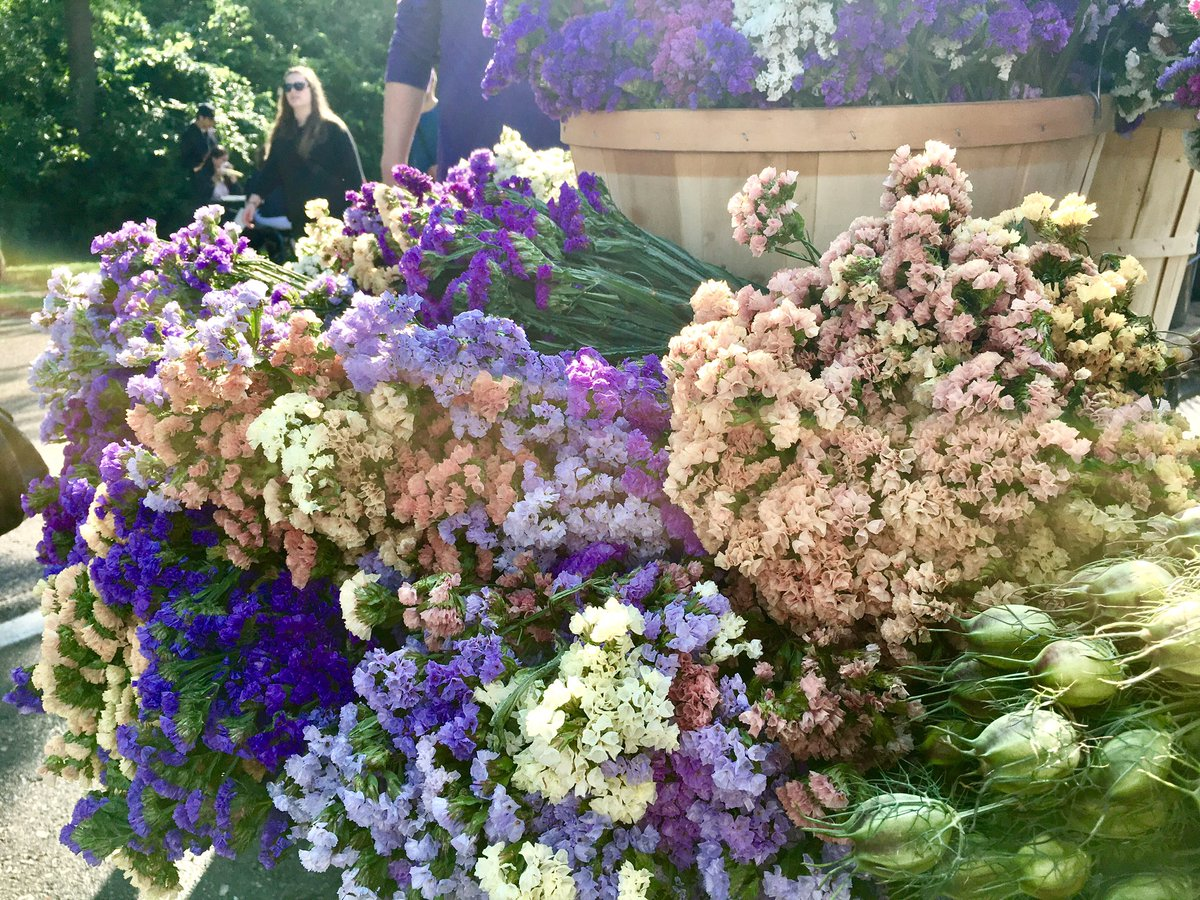 Cristina rosu on twitter such beautiful fall flowers at the cristina rosu on twitter such beautiful fall flowers at the farmers market today falliscoming flowers mindfulness amindfulmoment beautifulthings izmirmasajfo