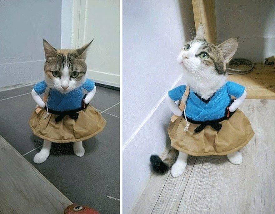 Днем рождения, прикольные костюмы для котов гифки