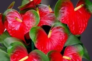 вьющиеся растения для сетки фото