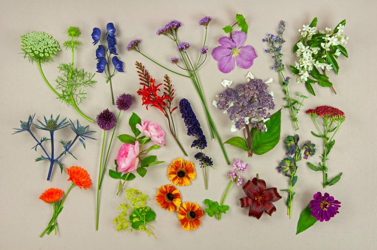 The Rhs On Twitter Enjoy A Beautiful Array Of Summer Plants Below