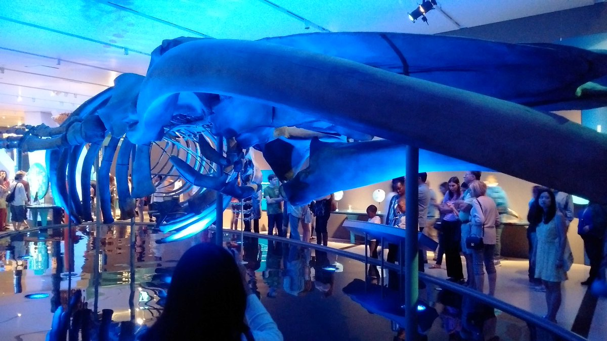 Great #ROMBlueWhale exhibit. Very sad that the whales died but learned a lot about them. Well done. <br>http://pic.twitter.com/wNlUbEqq33