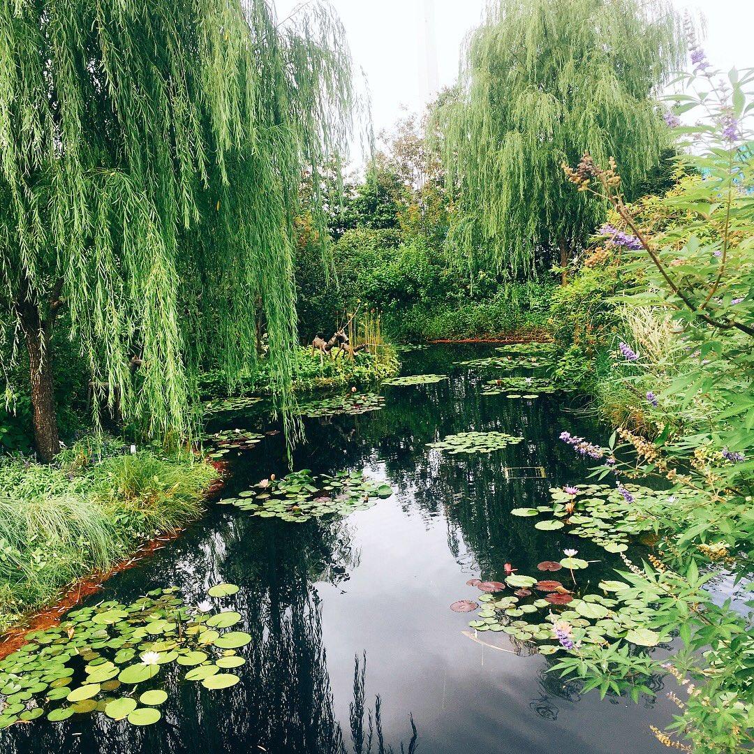 教えてもらった池袋西武の屋上庭園に来てみた。屋上とは思えないほど緑溢れててびっくり。モネの睡蓮のイメージで作っただ池らしい。癒されたー https://t.co/Is6aIcWWZ9