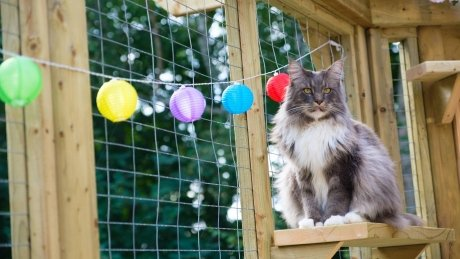 Catio living: Why a P.E.I. woman built a patio for her cats https://t.co/K88h70WyQ0 #pei https://t.co/hXooP3RgtD