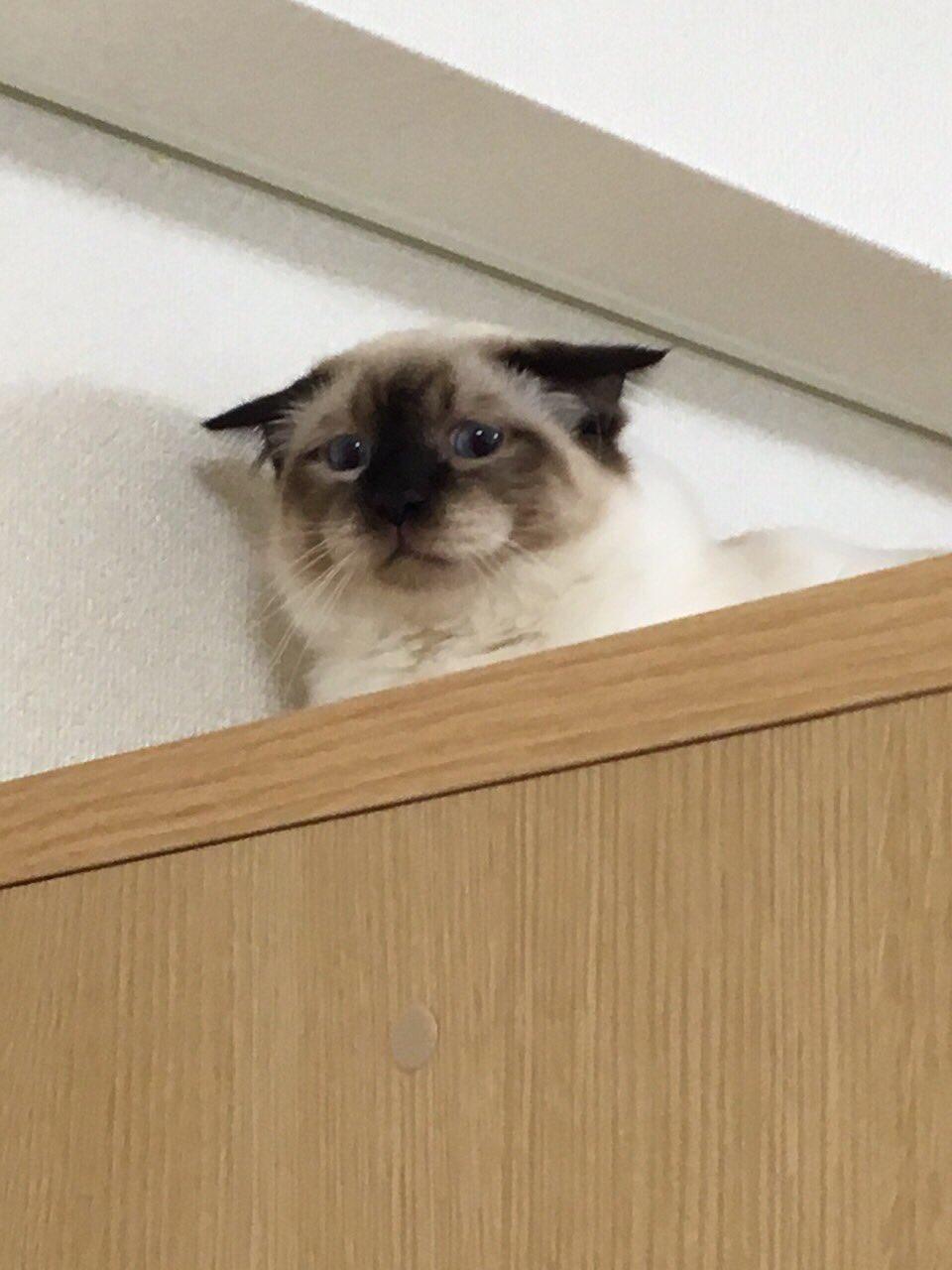 青いやつがあるせいでそちらにいけない猫が可愛すぎるww困った表情に注目!