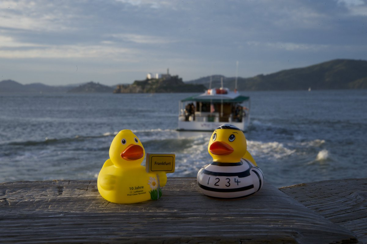 First to review yellow rubber duck click here to cancel reply - 1 Reply 2 Retweets 14 Likes