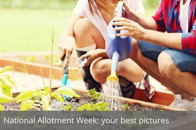 To celebrate #NationalAllotmentWeek we asked you to send us your photos  https:// buff.ly/2wo2DEa  &nbsp;  <br>http://pic.twitter.com/QNVHF9Q0n2