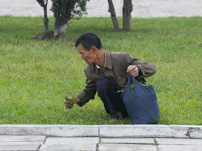В Северной Корее запретили продажу бензина рядовым гражданам... Получи, мировое