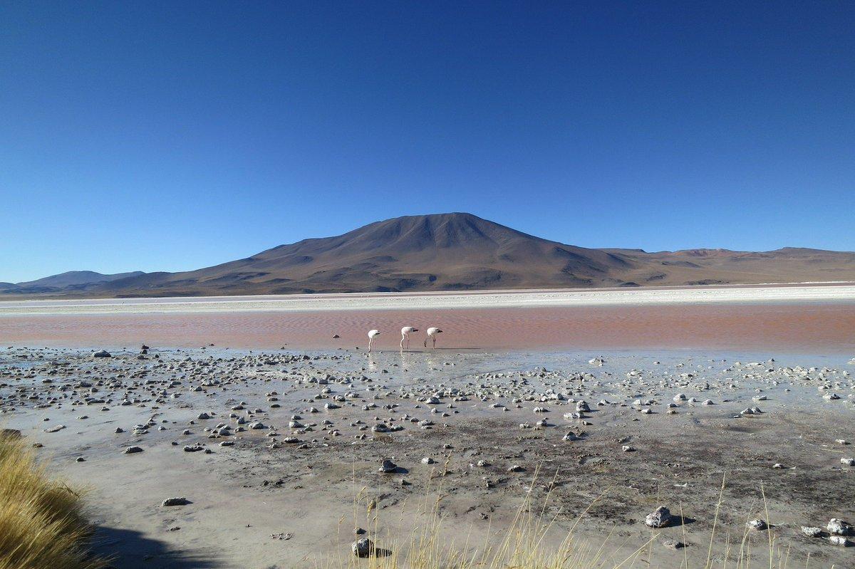 When #deserts bloom: rain turns #Chilean wasteland into flowery paradise https://t.co/wcjLYupAwo #AtacamaDesert