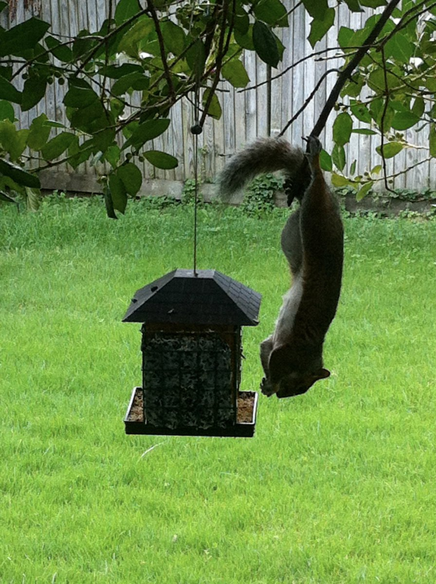 2017-08-28: Squirrel Red-Team -- USEFUL IMAGE FOR TALKS