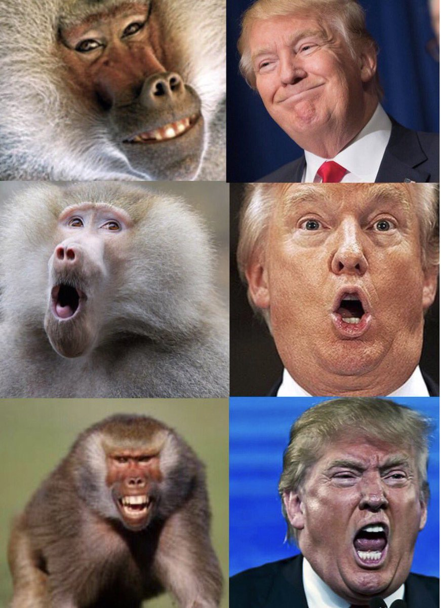 """Image result for trump as a baboon"""""""